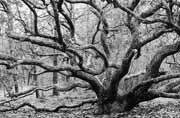 Tour of Trees