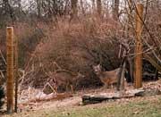 Got Deer?