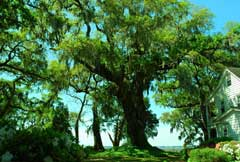 tree-house-beaufort