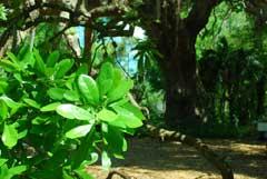tree-leaves-beaufort