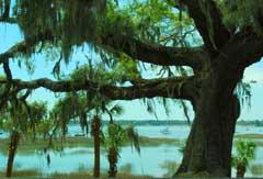 tree-water-beaufort