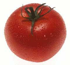 garden-tomato-lowcountry