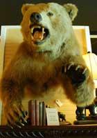 walterboro-rocks-bear