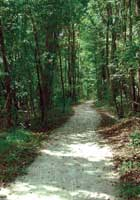 walterboro-wagon-road