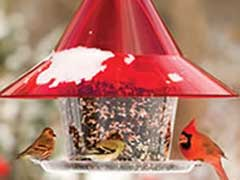 birds-bird-cafe
