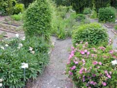 garden-medicinal-herb-garden