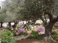 Creating a Biblical Garden