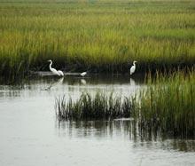 palm-key-marsh-birds