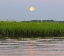 palm-key-marsh-moon