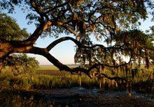 palm-key-tree