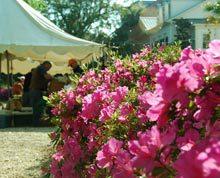habersham-farmers-market-flowers-2