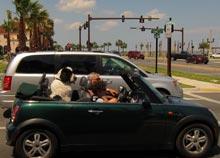 st-augustine-dog-car