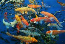 st-augustine-fish