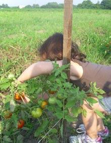 civitas-marshview-tomatoes
