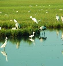 land-trust-birds
