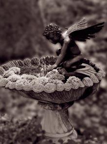 twin-peluso-hydrangea-angel