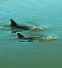 watermen-dolphin-halfmoon-creek