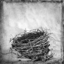 organics-geboy-nest