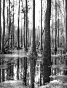 organics-geboy-trees