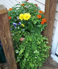 A Window Box for Margaret