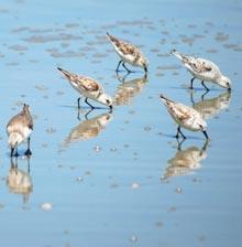 spring-beach-birds-close