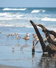spring-beach-birds-drift