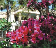 spring-fever-blooms-house