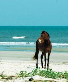 The Myth of Wild Horses