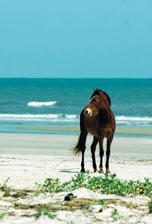 cumberland-horse-beach