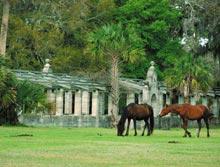 cumberland-horses-ruins