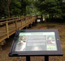 cypress-wetlands-boardwalk