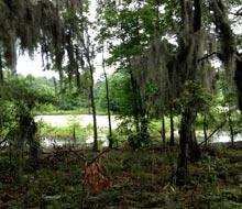 cypress-wetlands-scene