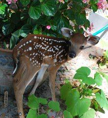 outsider-bambi-3