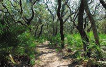 cumb-maritime-forest