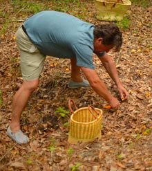 outsider-papa-foraging