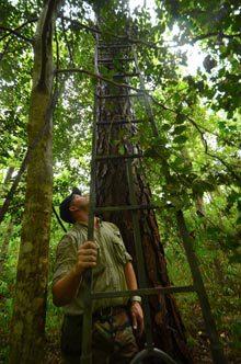 outsider-Hunting-ladder