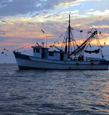 Eyes-Shrimp-boat-Wes-Grady