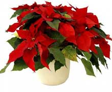 Holiday Help for Houseplants