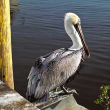 Lowcountry Photos at Colleton Museum