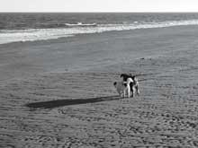 dog-beach-black