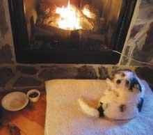dog-fireplace