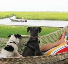 dog-hammock