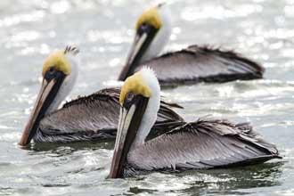 horan-birds