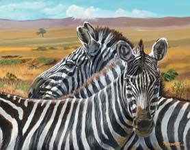 nature-Zebras