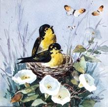 wrapsody-Putzier-birds