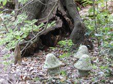 garden-mushrooms