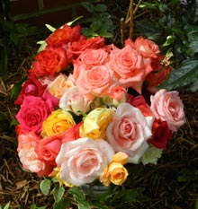 garden-roses
