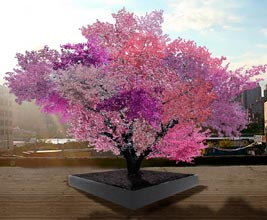 """The Artist's """"Tree of 40 Fruits"""""""