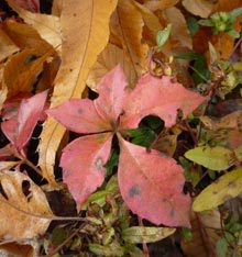 Native Plants in Autumn