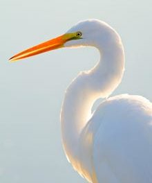 Portrait of the Lowcountry